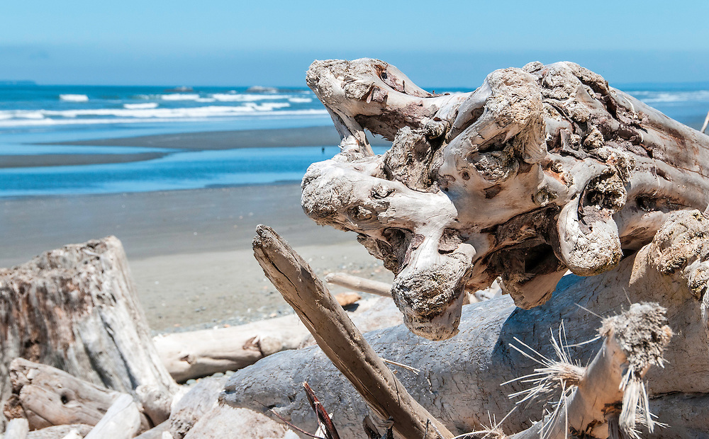 Driftwood on the beach west of Olympic National Park, La Push, Washington.