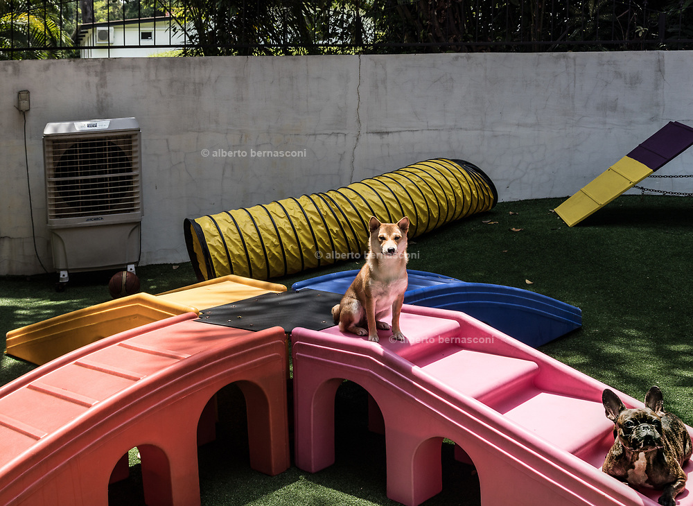 Singapore, the Wagington five stars pet hotel. A luxurious spa with facials and massage, gourmet in-room dining menu and high-end suites with the best beds . all the things to be expected at any five-star hotel.<br />