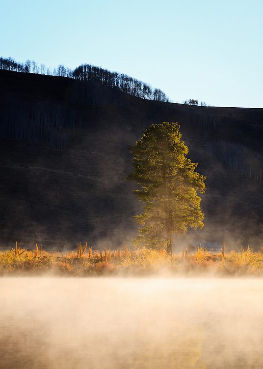 A tree rises out of the fog on Peanut Lake. Crested Butte, Colorado.