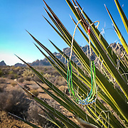 Pura Vida bracelet on yucca plants; Mojave National Preserve, California.