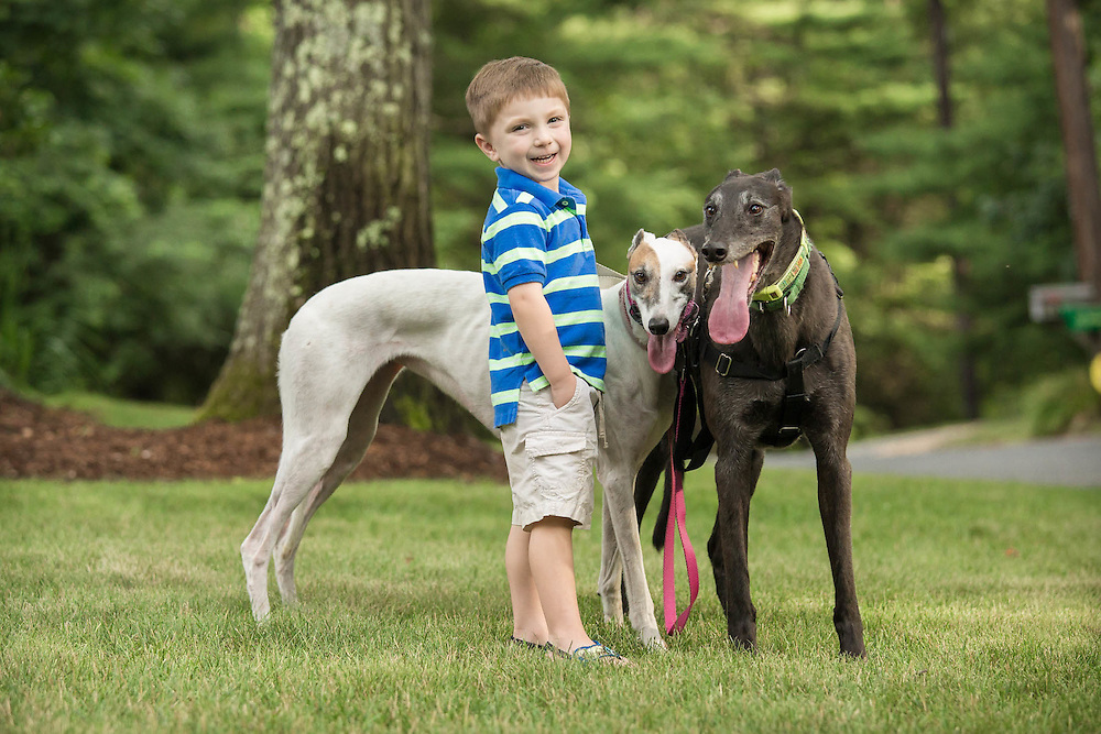 Youngest son with big smile and happy greyhound dogs