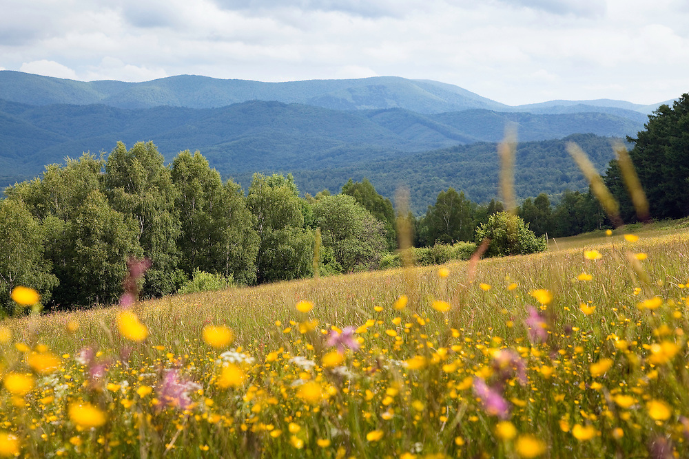 Hilly landscape with blooming meadow near Nova Sedlica, Poloniny National park, Western Carpathians, Eastern Slovakia, Europe