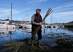 "© Licensed to London News Pictures. <br /> 13/05/2015. <br /> <br /> Whitby, United Kingdom<br /> <br /> Lol Hodgson, the Baliff of the Manor of Fyling carries out the ancient Penny Hedge tradition in Whitby.<br /> <br /> The beginnings of this ancient custom dating back to around 1159 are unclear but some say it was penance for the accidental killing of a hermit who was a monk at the abbey. Others say it was to mark a safe landing place or to mark a garth or enclosure or simply to keep out animals.<br /> <br /> However this now symbolic custom takes place each year on the eve of Ascension Day on the banks of the River Esk in Whitby and is constructed with nine upright hazel stakes driven into the mud with an ancient mallet and nine 'tethers' or pliant branches to intertwine the stakes.<br /> <br /> Completion of the hedge is followed by three blasts on an ancient horn and the cry of ""Out on Ye"" is repeated by the bailiff.<br /> <br /> Photo credit : Ian Forsyth/LNP"