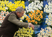 © Licensed to London News Pictures. 21/05/2012. Chelsea, UK. A man arranges a display of Daffodils.  Press preview of The Chelsea Flower Show today 21 May 2012. The world's most famous flower show, which has been held in the grounds of the Royal Chelsea Hospital since 1913, will be open to the public from Tuesday. Visitors are expected to flock in their thousands to see displays of plants, flowers and furniture for ideas on how to decorate their gardens.. Photo credit : Stephen Simpson/LNP
