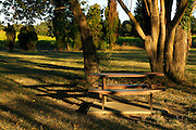 bench in a park during early morning