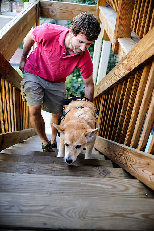 photo by Matt Roth..Takoma Village Cohousing resident Drew Kidder assists his elderly dog Calle for a walk up the steps to Drew's 2nd story condo, Saturday, September 22, 2012.