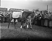 """08/03/1958<br /> 03/08/1958<br /> 08 March 1958<br /> Grand National entries at the Leopardstown Races. """"Longmead"""" owned by Mr. F. Rea."""