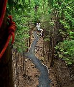 Woman enjoys a zipline adventure through the trees, Ketchikan, Alaska, USA.