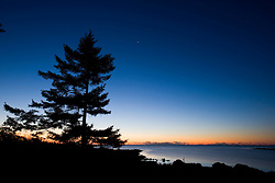 A spruce tree silhouetted against the pre-dawn sky of Biddeford, Maine.