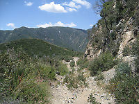 Butterfly habitat (San Gabriel Mountains Chaparral ) at Grizzly Flat, Angeles NF, Los Angeles Co, CA, USA, on 22-May-16