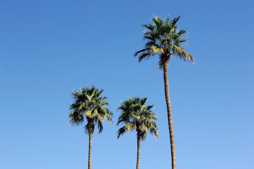 Palm trees, Palm Springs, California, United States of America