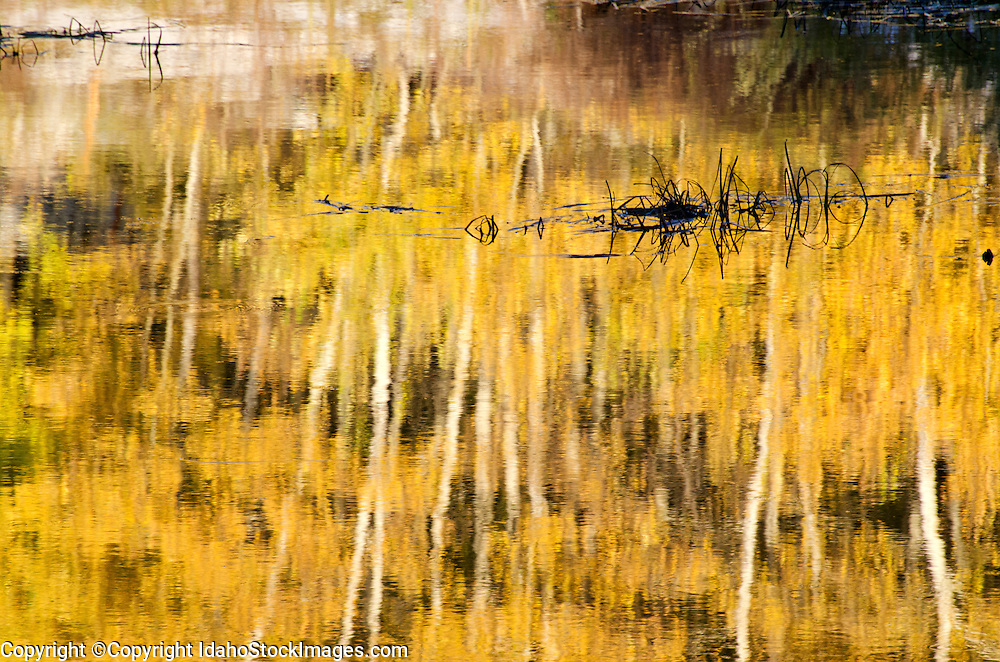 Goose Creek Mountains, Autumn reflections of Aspen trees at the Shoshone Creek Beaver Ponds high in the Goose Creek Mountains in southern Idaho