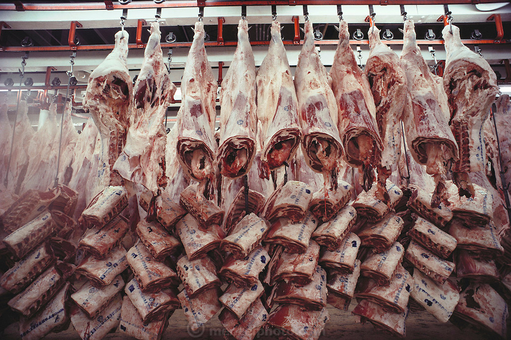 The Harris Ranch slaughterhouse, the Harris Beef Company, in Selma, California kills more than 700 head of cattle a day. Beef carcasses are cooled in a huge refrigerated room. San Joaquin Valley, California. USA [[From the company: THE HARRIS FARMS GROUP OF COMPANIES. Harris Farms, Inc. is one of the nation's largest, vertically integrated family owned agribusinesses]].