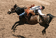 Bareback Rider Steven James Dent earns a 76 while riding 2 Kick a Mike BR, 28 July 2007, Cheyenne Frontier Days