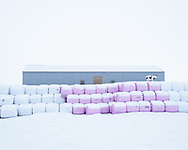 Bales of silage, Northern Iceland