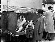 Irish Kennel Club Dog Show..17.03.1961