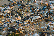 Broken-up Seashells Litter the Beach