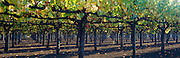 Under a Vineyard