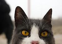 katt, cat