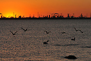 Oil refinery and chemical industrial plants on the Texas, USA coast with seabirds at sunset.