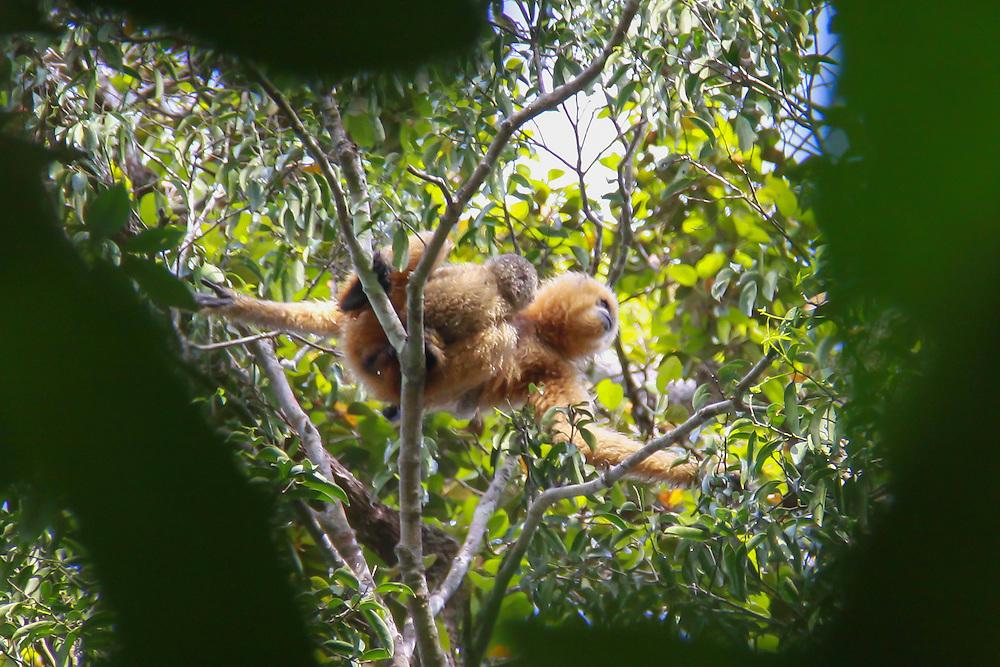 Mother Gibbon