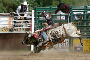 061811-Evergreen, COLORADO-evergreenrodeo-Bull rider Brian Larson, of Erie, CO, hangs on tight during the Evergreen Rodeo Saturday, June 18, 2011 at the El Pinal Rodeo Grounds..Photo By Matthew Jonas/Evergreen Newspapers/Photo Editor