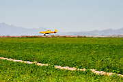 04 MARCH 2010 - CHANDLER, AZ: A crop duster sprays a farm field in Chandler, AZ.   PHOTO BY JACK KURTZ
