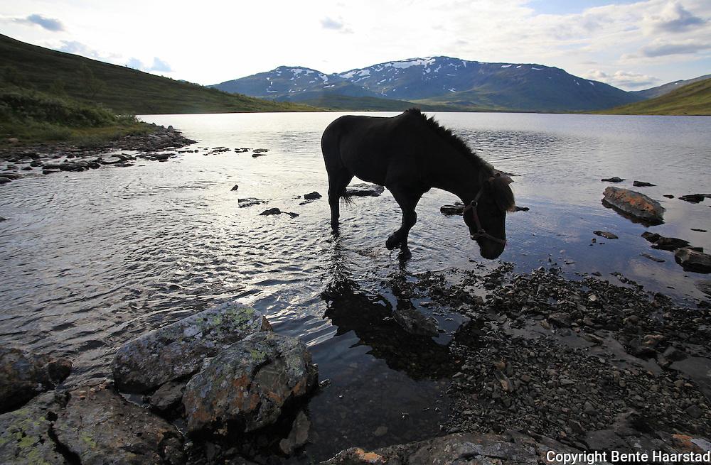 Flere firma satser på hesteturisme fjellet i Tydal, og i bygda Stugudal er det flere islandshester enn fastboende. There are many possibilities for riding in the mountains in Tydal in Mid-Norway. Dyrhaug Ridesenter,