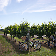 Bikes parked amongst the vines at Triangle Red WInery during a tour with  On Yer Bike Winery Tours, a unique, one-day, cycling experience giving visitors the opportunity to enjoy tasting some of Hawkes Bay's finest foods and wines, while at the same time, taking in the superb scenery of the Ngatarawa Triangle, .cycle past vineyards, olive groves, orchards, horse studs, and farmland - all on flat terrain with wonderful vistas. Hawkes, Bay, New Zealand,, 4th January 2011. Photo Tim Clayton..