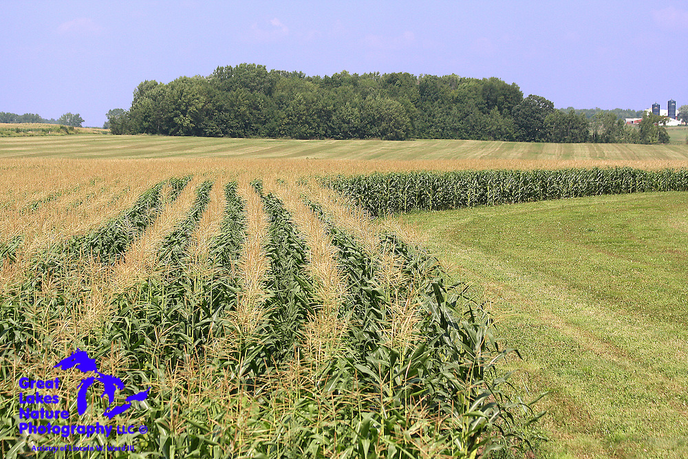 Even though nature is usually my focus, I also love farm scenes. I find maturing corn fields, such as this one in northern Manitowoc County, Wisconsin, to be particularly beautiful.