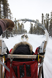A dog sled team travels on a cloudy, snowy, winter day in the Arctic Circle.
