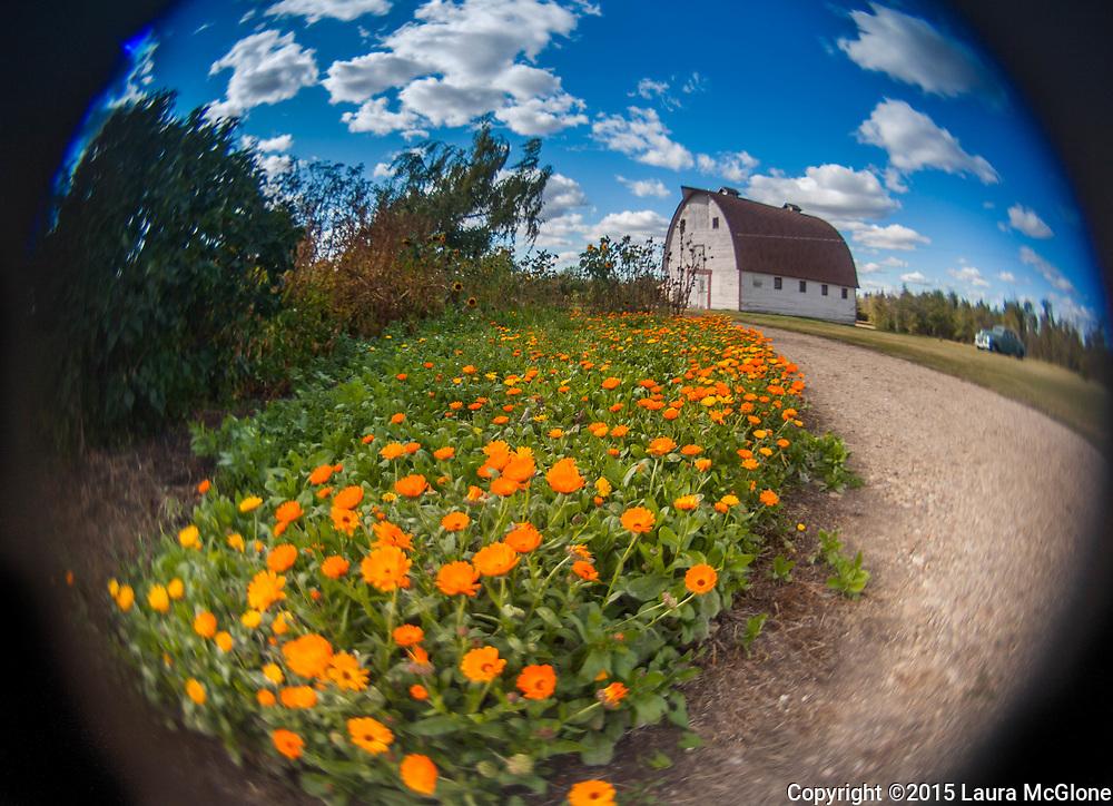 Summer Rural Scene taken with fisheye lens, Alberta Canada