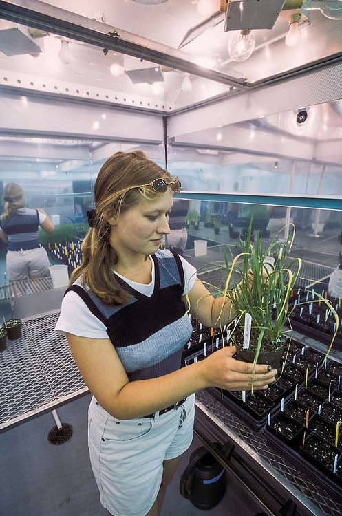 Kansas, USA - Rice blast reaserch in artificial growth chamber with grad student Laura Munson