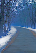Road or path leading into a wood with snow and fog and a blue light cast around.