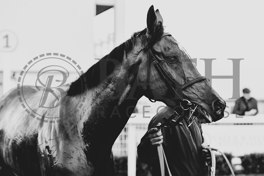 """Singing The Blues ridden by Rob Hornby and trained by Rod Millman in the Read """"Group 1 Griff"""" At Valuerater.Co.Uk Handicap race.  - Mandatory by-line: Ryan Hiscott/JMP - 01/05/2019 - HORSE RACING - Bath Racecourse - Bath, England - Wednesday 1 May 2019 Race Meeting"""