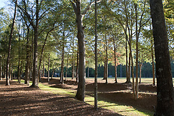 Trees line Island Fort Road, one of several colonial paths leading from Ninety Siix National Historic Site, near Ninety-Six, SC.