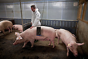 Biogas extracted from pig faeces (slurry) is converted to bio energy at the Sterksel Practice Center (Praktijkcentrum Sterksel) in Sterksel, The Netherlands on 20 October, 2008. Beside their pig dairy farm that runs completely on bio energy, Sterksel Practice Center delivers bio electricity with a capacity for approximately 700 households. (Photo by Michel de Groot)