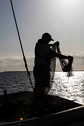 Silhouette of Texas Parks & Wildlife Coastal Fisheries Field Technician, Mark Krupp, holding trawling net containing marine life from Galveston Bay on Texas Gulf Coast.