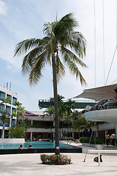 Republic of Singapore Yacht Club. The oldest club in Singapore, and the only yacht club owned by its members. Founded in 1826, awarded with a National Heritage Board Plaque in June 2000. The RSYC also won the SIA Architectural Design Award 2001.