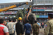 Feb. 10, 2016 - Siliguri, west bengal, INDIA - <br /> Elephant Runs Riot<br /> <br /> A wild elephant that strayed into the town stands after authorities shot it with a tranquilizer gun at Siliguri in West Bengal state, India, Wednesday, Feb. 10, 2016. The elephant had wandered from the Baikunthapur forest on Wednesday, crossing roads and a small river before entering the town. The panicked elephant ran amok, trampling parked cars and motorbikes before it was tranquilized.<br /> ©Exclusivepix Media