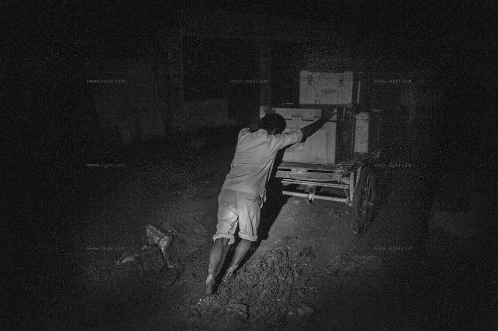 4:15am. The cold boxes containing the ice-packs are carried on bicycle carts, bare footed through thick mud, to the river were they are loaded onto boats that take the vaccine to a sub depots to be distributed to vaccinator teams and reach more than two hudred villages on the flood plains of the Kosi river. Kusheshwar Asthan east, Bihar.