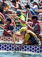 新华社照片,洛杉矶,2017年7月31日<br />     (国际)(10)第二十一届加州长滩龙舟节<br />     7月30日,参赛选手奋力划桨。<br />     在美国洛杉矶长滩市海滨体育场举行的第二十一届年度长滩龙舟节,吸引百余队上千选手参赛。长滩龙舟节是加州最大的龙舟比赛,同时也展示了中国古代龙舟赛的运动。<br />     新华社发(赵汉荣摄)<br /> Dragon Boat racers compete during a 500-meter race at the 21st Annual Long Beach Dragon Boat Festival at Marine Stadium in Long Beach, California, the United States, on July 30, 2017. The Long Beach Dragon Boat Festival is held every year in July at Marine Stadium to hosting the largest dragon boat competitions in California. It showcases the ancient Chinese sport of dragon boat racing. (Xinhua/Zhao Hanrong)(Photo by Ringo Chiu)<br /> <br /> Usage Notes: This content is intended for editorial use only. For other uses, additional clearances may be required.