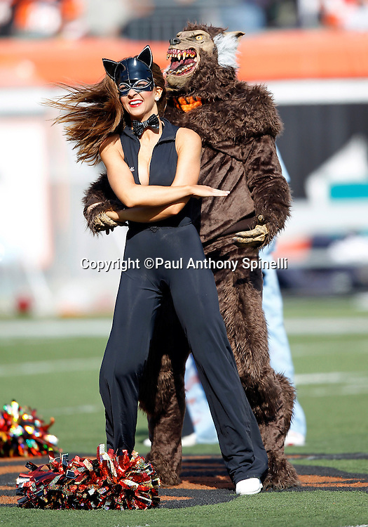 A Cincinnati Bengals Ben-Gal cheerleader does a dance routine with a man in a wolf costume as part of the Halloween halftime show during the NFL week 8 football game against the Miami Dolphins on Sunday, October 31, 2010 in Cincinnati, Ohio. The Dolphins won the game 22-14. (©Paul Anthony Spinelli)