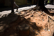 Belo Horizonte_MG, Brasil...Raizes de arvores na calcada da avenida Augusto de Lima no centro de Belo Horizonte...The tree roots in the sidewalk of the Augusto de Lima avenue in Belo Horizonte downtown...Foto: LEO DRUMOND / NITRO