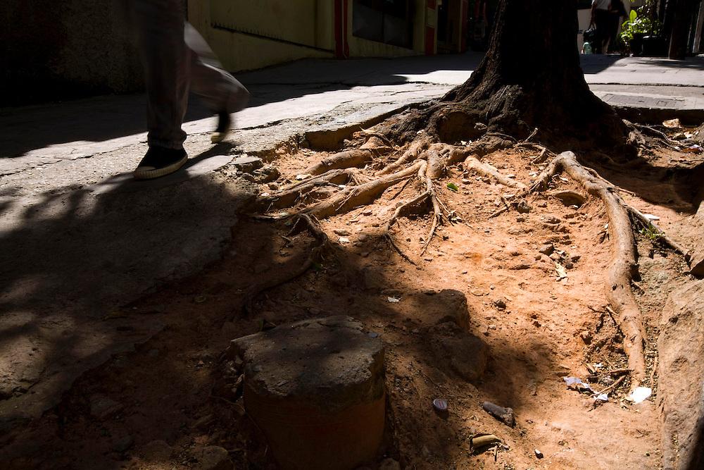 Belo Horizonte_MG, Brasil...Raizes de arvores na calcada da avenida Augusto de Lima no centro de Belo Horizonte...The tree roots in the sidewalk of the Augusto de Lima avenue in Belo Horizonte downtown...Foto: LEO DRUMOND / NITRO