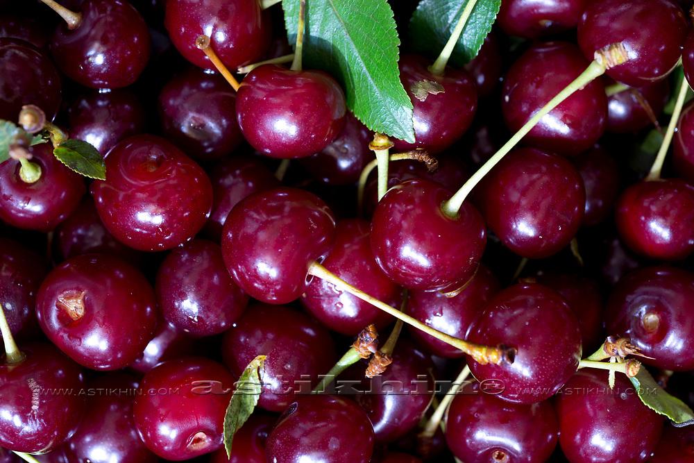 Fresh Wild Cherries