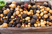 A picture of a bin full of fresh potatoes at a Farmers Market in Seattle, Washington. Missoula Photographer