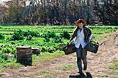 Henry's Farm