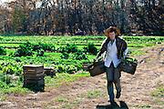 Farmer Henry Brockman