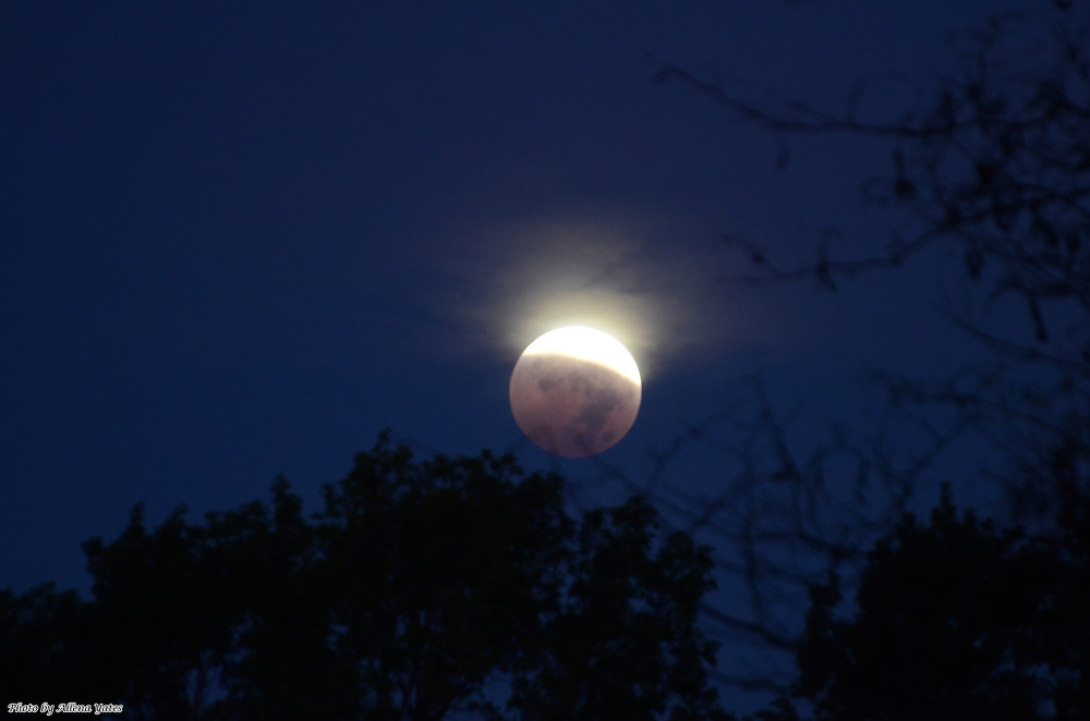 Blood Moon sets in the trees while the eclipse shadow recedes, October 8, 2014, 6:45 a.m.